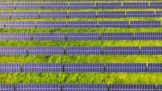 Horizontal rows of purple-hued solar panels in a verdant green field. Opportunities for renewable energy businesses