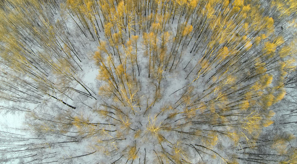Drones are being used to disperse seeds and encourage new pockets of forestry to develp
