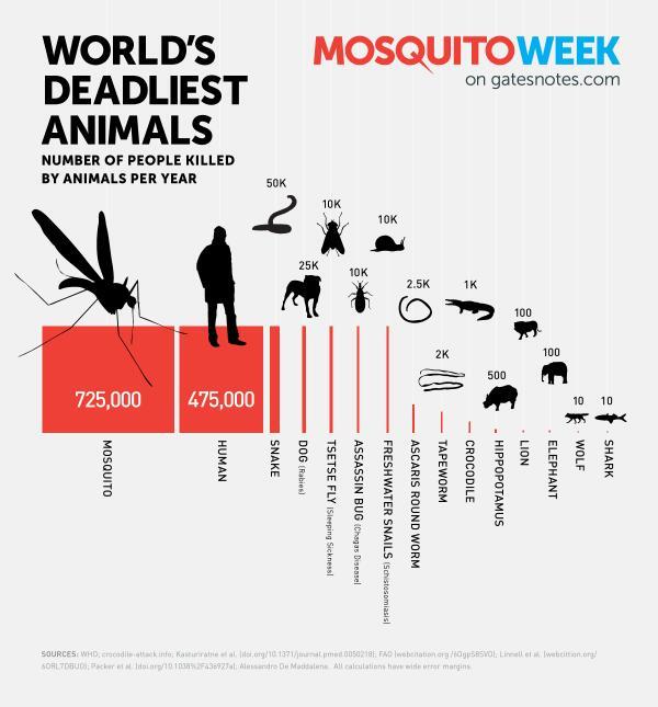 world's deadliest animals infographic
