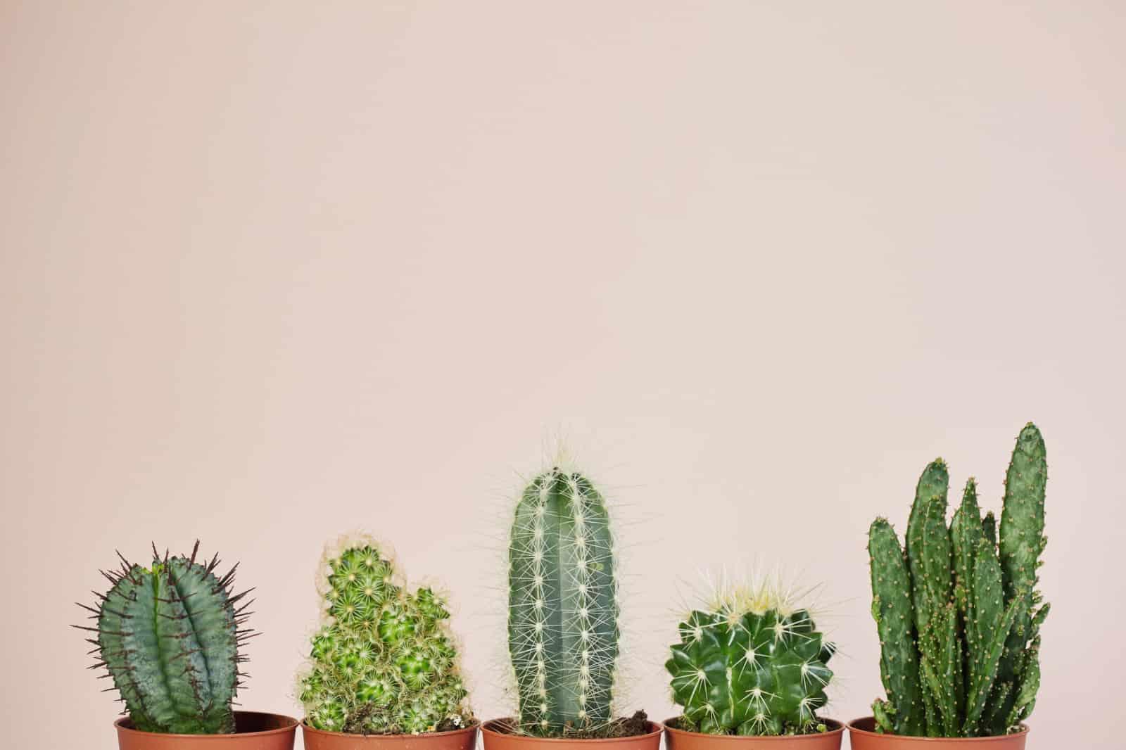 Cactus plants representing R&D tax credit eligibility criteria